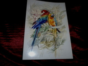 Parrots,  Budgies and Owls on fine art prints